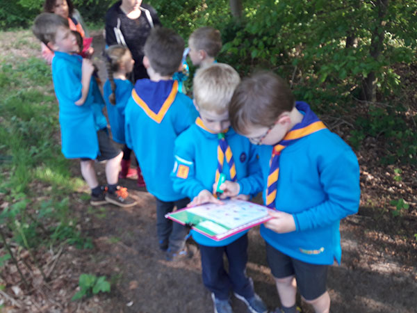 Beavers in the woods